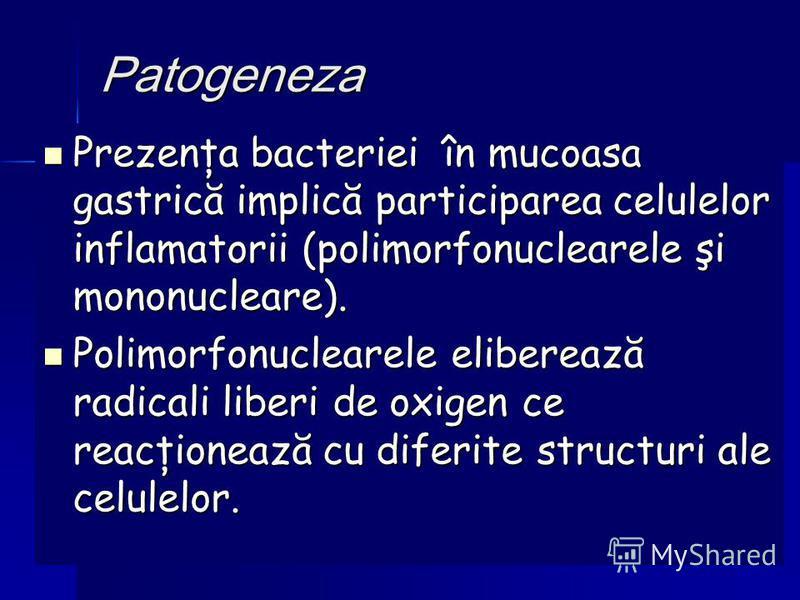 Patogeneza Prezenţa bacteriei în mucoasa gastrică implică participarea celulelor inflamatorii (polimorfonuclearele şi mononucleare). Prezenţa bacteriei în mucoasa gastrică implică participarea celulelor inflamatorii (polimorfonuclearele şi mononuclea