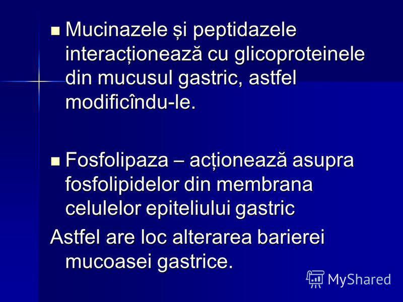 Mucinazele şi peptidazele interacţionează cu glicoproteinele din mucusul gastric, astfel modificîndu-le. Mucinazele şi peptidazele interacţionează cu glicoproteinele din mucusul gastric, astfel modificîndu-le. Fosfolipaza – acţionează asupra fosfolip
