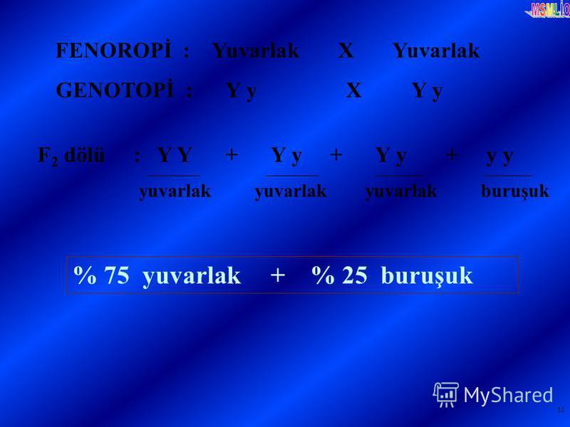 33 FENOROPİ : Yuvarlak X Yuvarlak GENOTOPİ : Y y X Y y F 2 dölü : Y Y + Y y + Y y + y y % 75 yuvarlak + % 25 buruşuk yuvarlak yuvarlak yuvarlak buruşuk