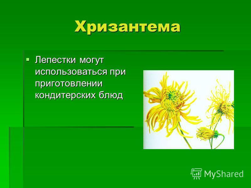 Хризантема Лепестки могут использоваться при приготовлении кондитерских блюд Лепестки могут использоваться при приготовлении кондитерских блюд