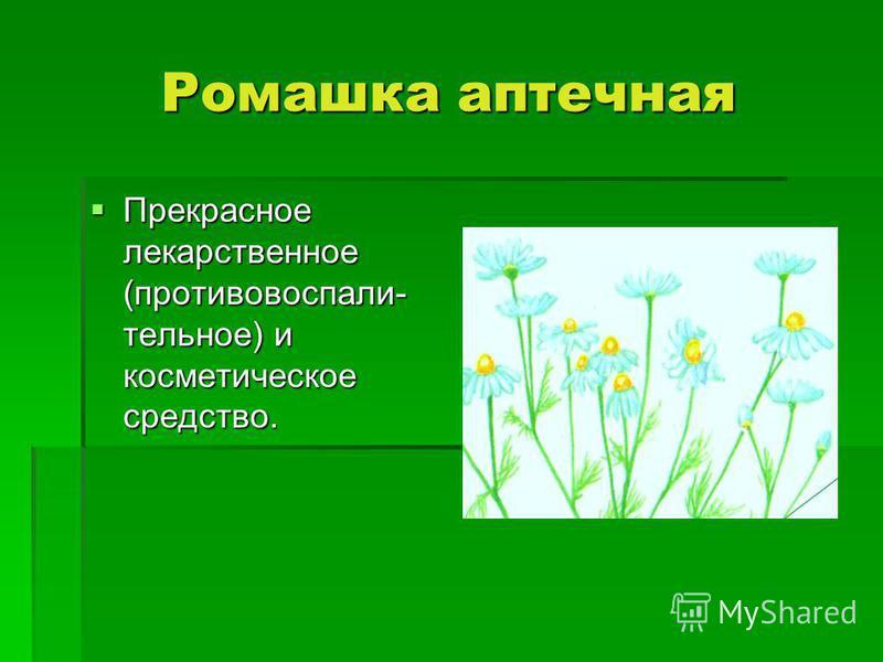 Ромашка аптечная Прекрасное лекарственное (противовоспалительное) и косметическое средство. Прекрасное лекарственное (противовоспалительное) и косметическое средство.