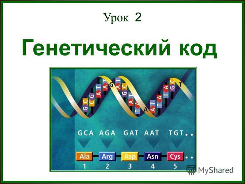 Урок 2 Генетический код Генетический код