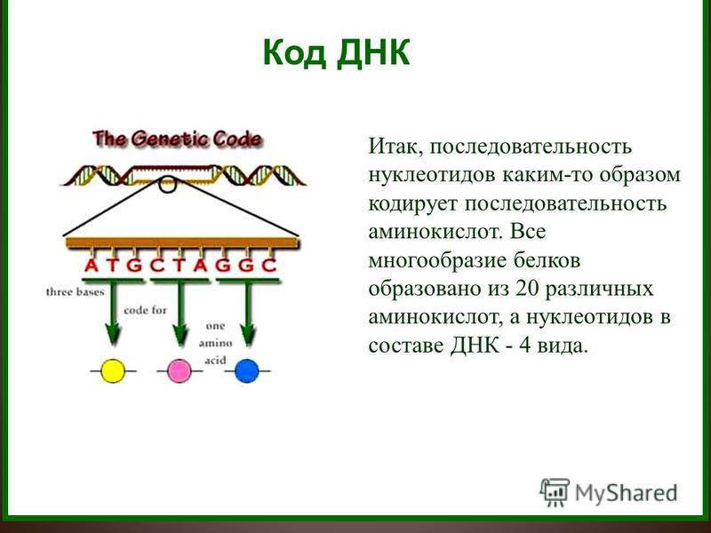 Код ДНК Итак, последовательность нуклеотидов каким-то образом кодирует последовательность аминокислот. Все многообразие белков образовано из 20 различных аминокислот, а нуклеотидов в составе ДНК - 4 вида.