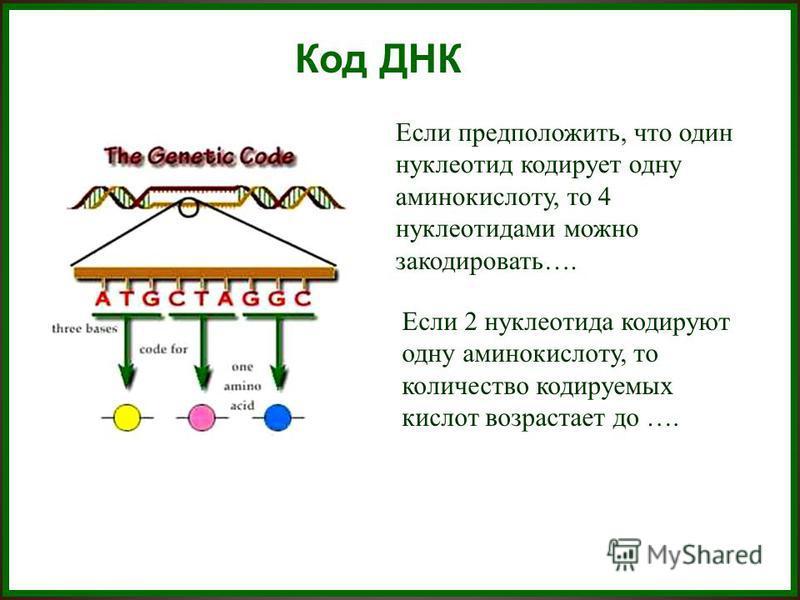 Код ДНК Если предположить, что один нуклеотид кодирует одну аминокислоту, то 4 нуклеотидами можно закодировать…. Если 2 нуклеотида кодируют одну аминокислоту, то количество кодируемых кислот возрастает до ….