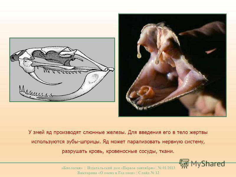 У змей яд производят слюнные железы. Для введения его в тело жертвы используются зубы-шприцы. Яд может парализовать нервную систему, разрушать кровь, кровеносные сосуды, ткани. «Биология» | Издательский дом «Первое сентября» | 01/2013 Викторина «О зм