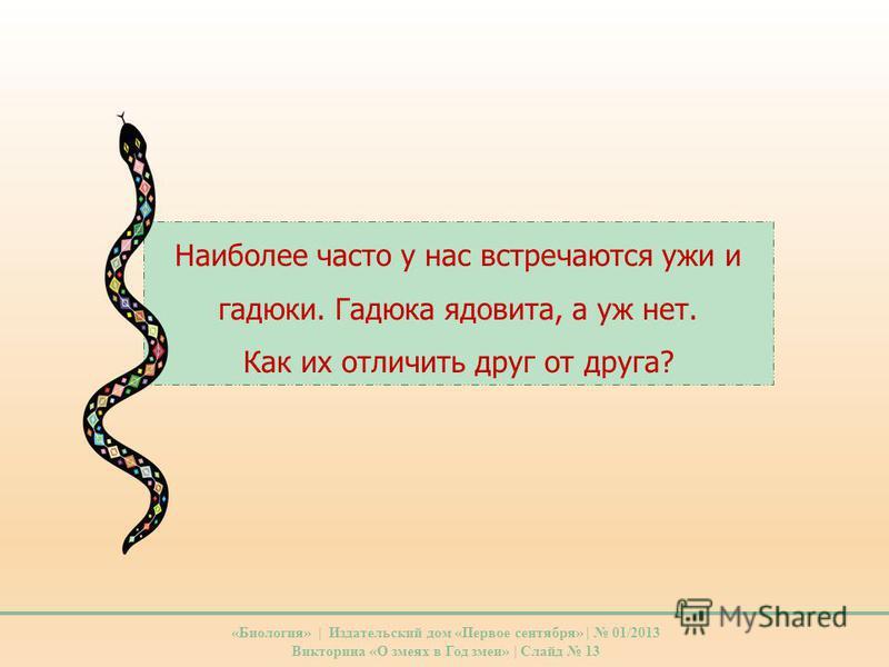 Наиболее часто у нас встречаются ужи и гадюки. Гадюка ядовита, а уж нет. Как их отличить друг от друга? «Биология» | Издательский дом «Первое сентября» | 01/2013 Викторина «О змеях в Год змеи» | Слайд 13