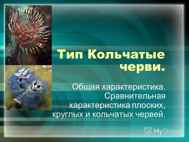 Тип Кольчатые черви. Общая характеристика. Сравнительная характеристика плоских, круглых и кольчатых червей.