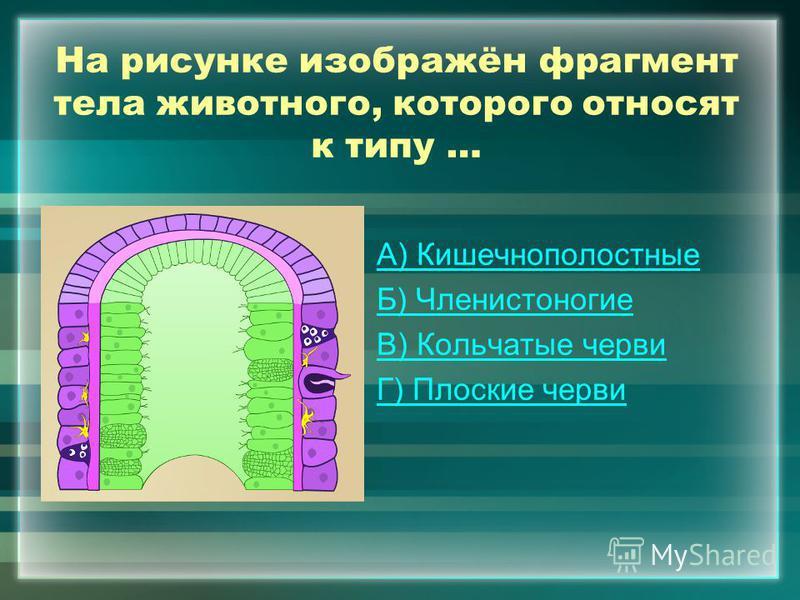 На рисунке изображён фрагмент тела животного, которого относят к типу … А) Кишечнополостные Б) Членистоногие В) Кольчатые черви Г) Плоские черви