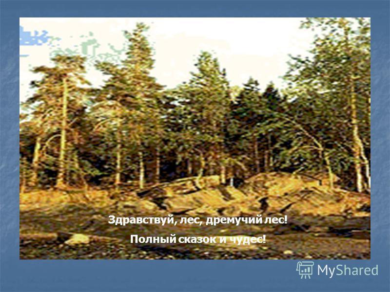 Здравствуй, лес, дремучий лес! Полный сказок и чудес!