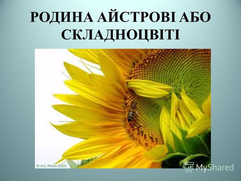 РОДИНА АЙСТРОВІ АБО СКЛАДНОЦВІТІ Теслюк Л.П