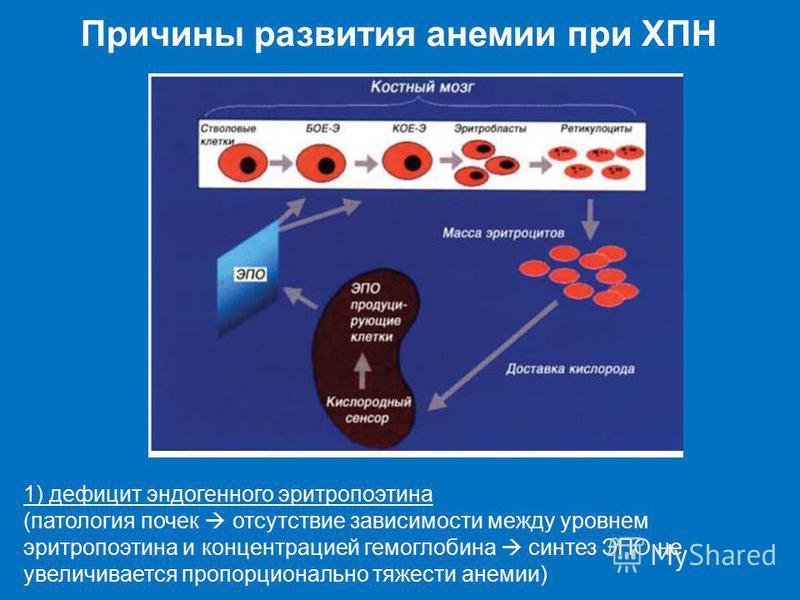 1) дефицит эндогенного эритропоэтина (патология почек отсутствие зависимости между уровнем эритропоэтина и концентрацией гемоглобина синтез ЭПО не увеличивается пропорционально тяжести анемии)