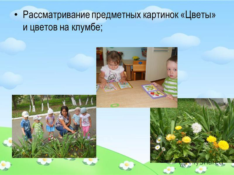 Рассматривание предметных картинок «Цветы» и цветов на клумбе;