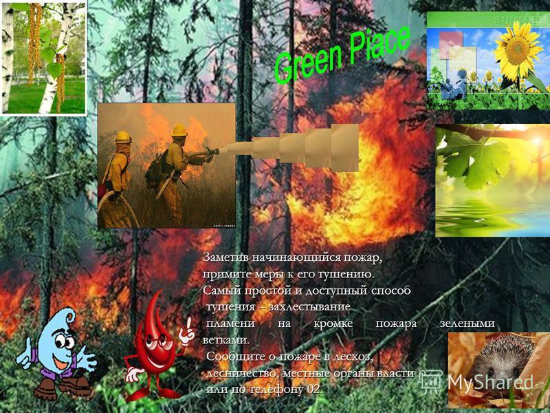 Заметив начинающийся пожар, примите меры к его тушению. Самый простой и доступный способ тушения – захлестывание тушения – захлестывание пламени на кромке пожара зелеными ветками. пламени на кромке пожара зелеными ветками. Сообщите о пожаре в лесхоз,