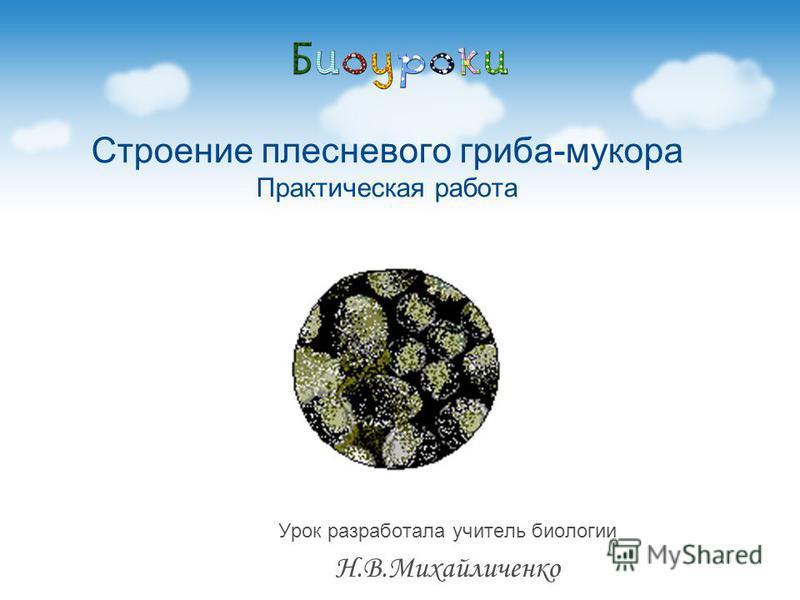 Урок разработала учитель биологии Н.В.Михайличенко Строение плесневого гриба-мукора Практическая работа