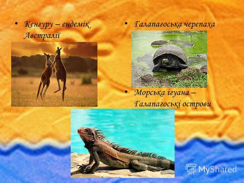 Кенгуру – ендемік Австралії Галапагоська черепаха Морська ігуана – Галапагоські острови