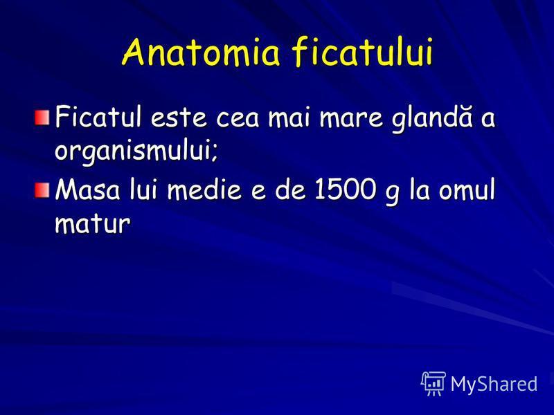 Anatomia ficatului Ficatul este cea mai mare glandă a organismului; Masa lui medie e de 1500 g la omul matur