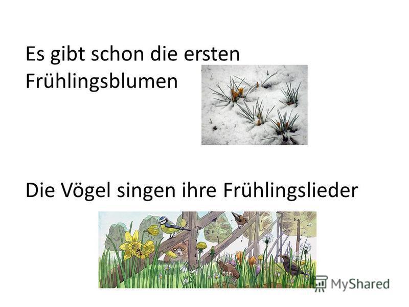 Es gibt schon die ersten Frühlingsblumen Die Vögel singen ihre Frühlingslieder