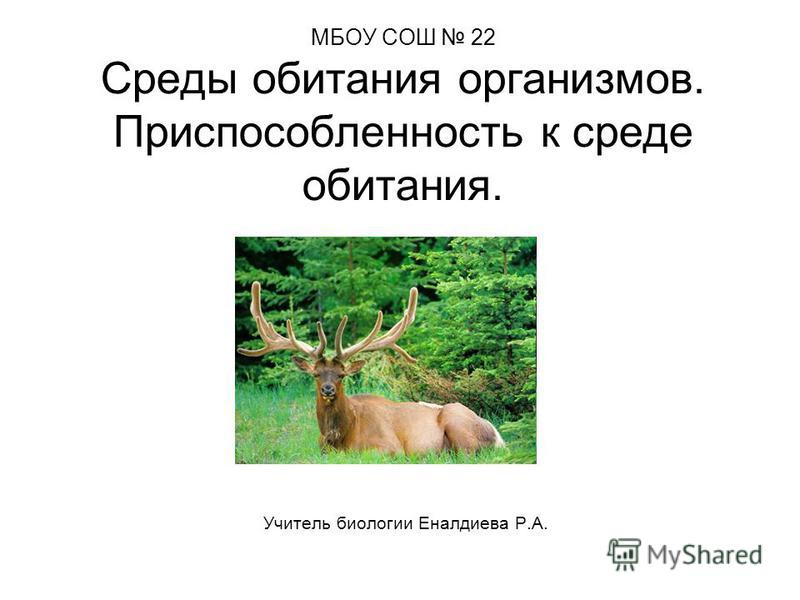МБОУ СОШ 22 Среды обитания организмов. Приспособленность к среде обитания. Учитель биологии Еналдиева Р.А.