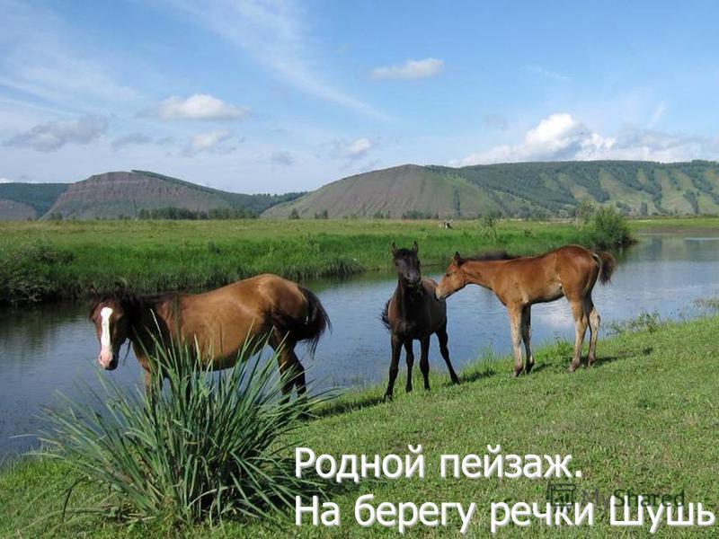 Родной пейзаж. На берегу речки Шушь