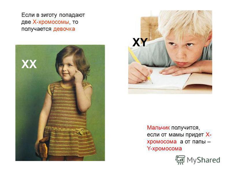 Если в зиготу попадают две X-хромосомы, то получается девочка Мальчик получится, если от мамы придет X- хромосома, а от папы – Y-хромосома ХХ XY