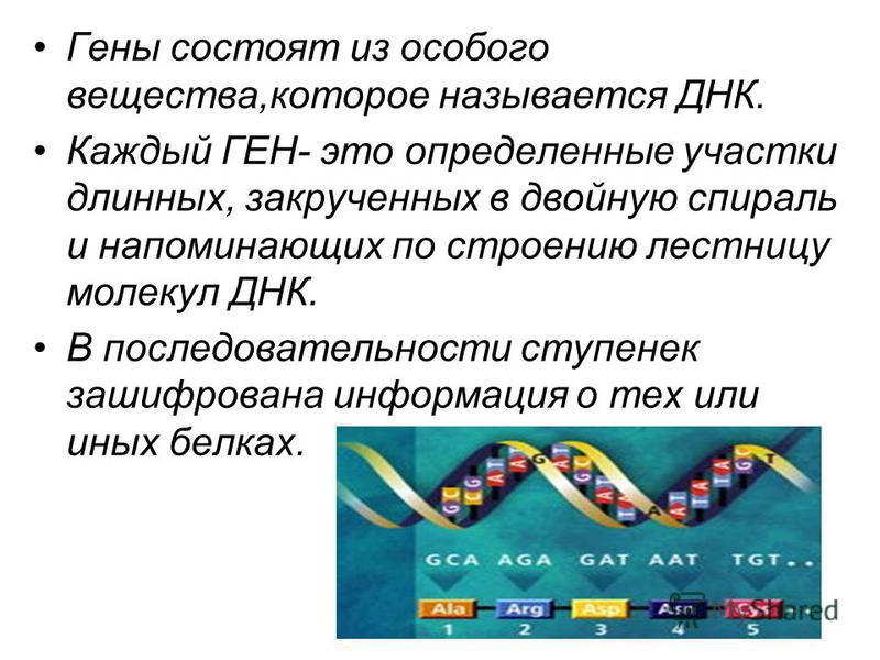 Гены состоят из особого вещества,которое называется ДНК. Каждый ГЕН- это определенные участки длинных, закрученных в двойную спираль и напоминающих по строению лестницу молекул ДНК. В последовательности ступенек зашифрована информация о тех или иных