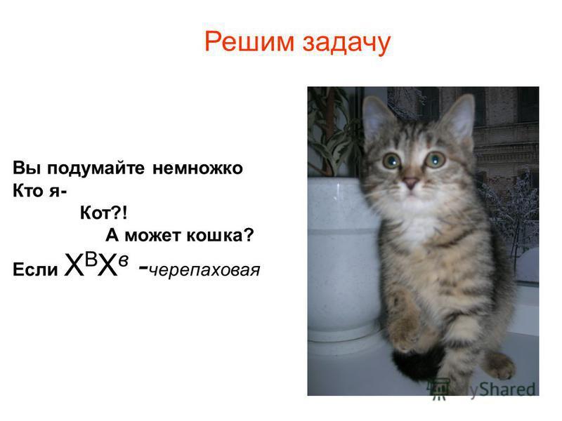 Вы подумайте немножко Кто я- Кот?! А может кошка? Если Х В Х в - черепаховая Решим задачу