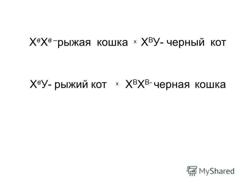 Х в Х в – рыжая кошка х Х В У- черный кот Х в У- рыжий кот х Х В Х В- черная кошка