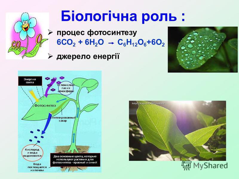 Біологічна роль : процес фотосинтезу 6СО 2 + 6Н 2 О С 6 Н 12 О 6 +6О 2 джерело енергії