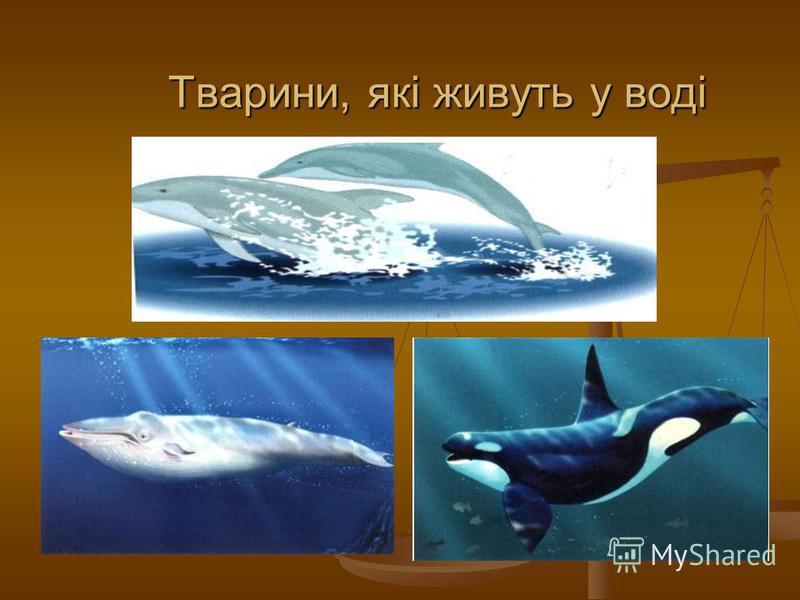 Тварини, які живуть у воді Тварини, які живуть у воді