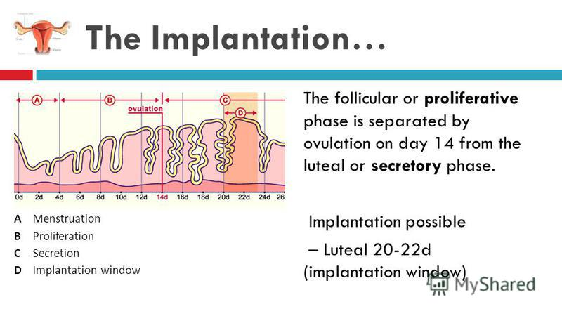 The Implantation… The follicular or proliferative phase is separated by ovulation on day 14 from the luteal or secretory phase. Implantation possible – Luteal 20-22d (implantation window) ABCDABCD Menstruation Proliferation Secretion Implantation win