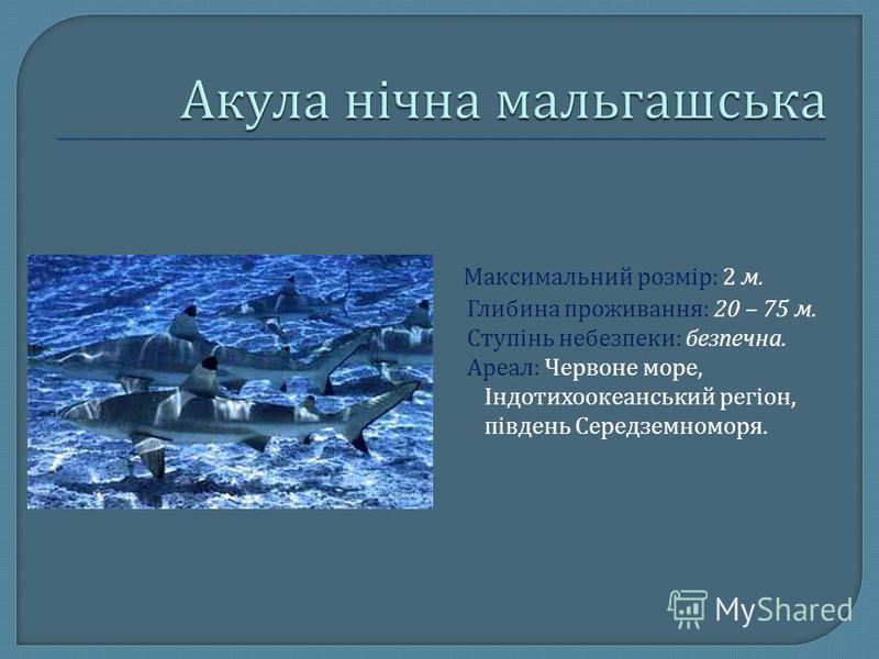 Максимальний розмір : 2 м. Глибина проживання : 20 – 75 м. Ступінь небезпеки : безпечна. Ареал : Червоне море, Індотихоокеанський регіон, південь Середземноморя.
