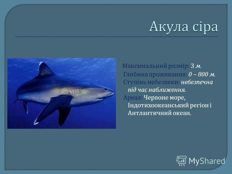Максимальний розмір : 3 м. Глибина проживання : 0 – 800 м. Ступінь небезпеки : небезпечна під час наближення. Ареал : Червоне море, Індотихоокеанський регіон і Антлантичний океан.