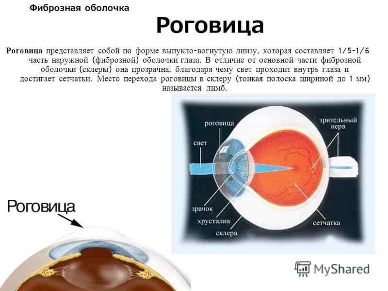 Фиброзная оболочка Роговица представляет собой по форме выпукло - вогнутую линзу, которая составляет 1/5-1/6 часть наружной ( фиброзной ) оболочки глаза. В отличие от основной части фиброзной оболочки ( склеры ) она прозрачна, благодаря чему свет про