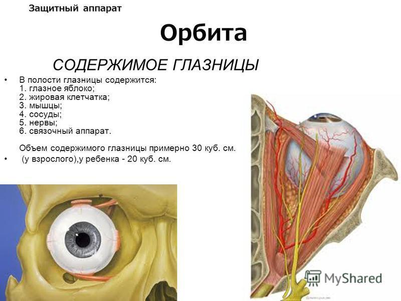 Защитный аппарат СОДЕРЖИМОЕ ГЛАЗНИЦЫ В полости глазницы содержится: 1. глазное яблоко; 2. жировая клетчатка; 3. мышцы; 4. сосуды; 5. нервы; 6. связочный аппарат. Объем содержимого глазницы примерно 30 куб. см. (у взрослого),у ребенка - 20 куб. см. Ор