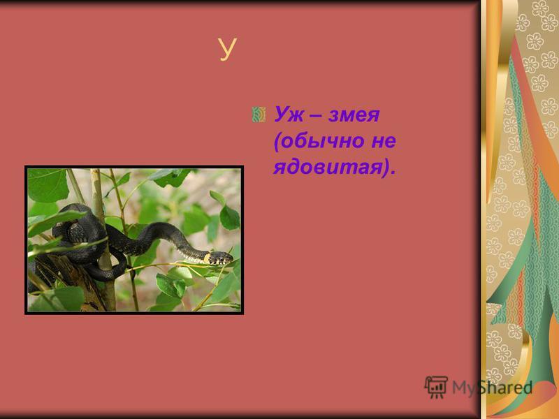 У Уж – змея (обычно не ядовитая).