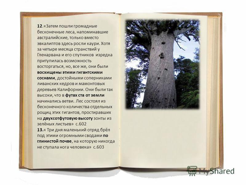 12.«Затем пошли громадные бесконечные леса, напоминавшие австралийские, только вместо эвкалиптов здесь росли каури. Хотя за четыре месяца странствий у Гленарвана и его спутников изредка притупилась возможность восторгаться, но, все же, они были восхи