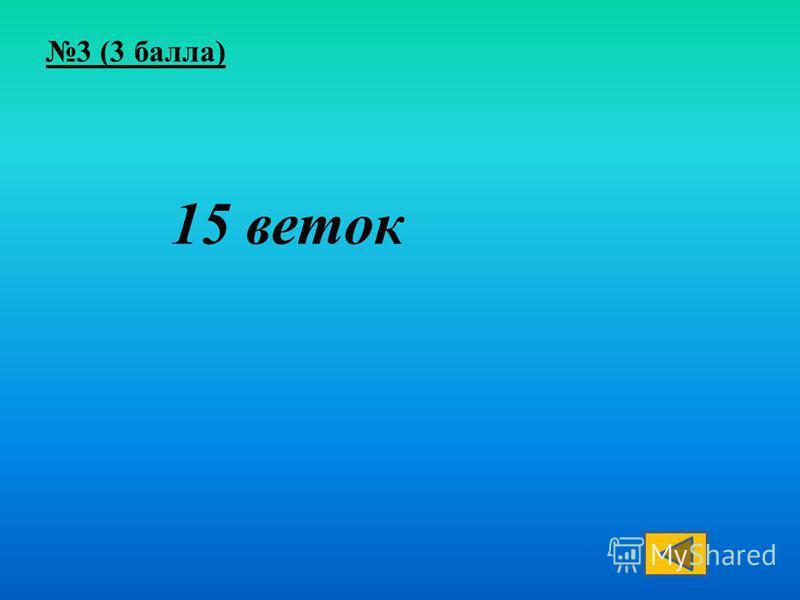 15 веток