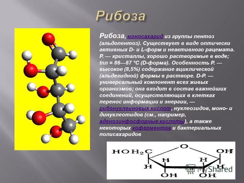 Pибоза, моносахарид из группы пентоз (альдопентоз). Существует в виде оптически активных D- и L-форм и неактивного рацемата. Р. кристаллы, хорошо растворимые в воде; апл = 8687 °C (D-форма). Особенность Р. высокое (8,5%) содержание ациклической (альд