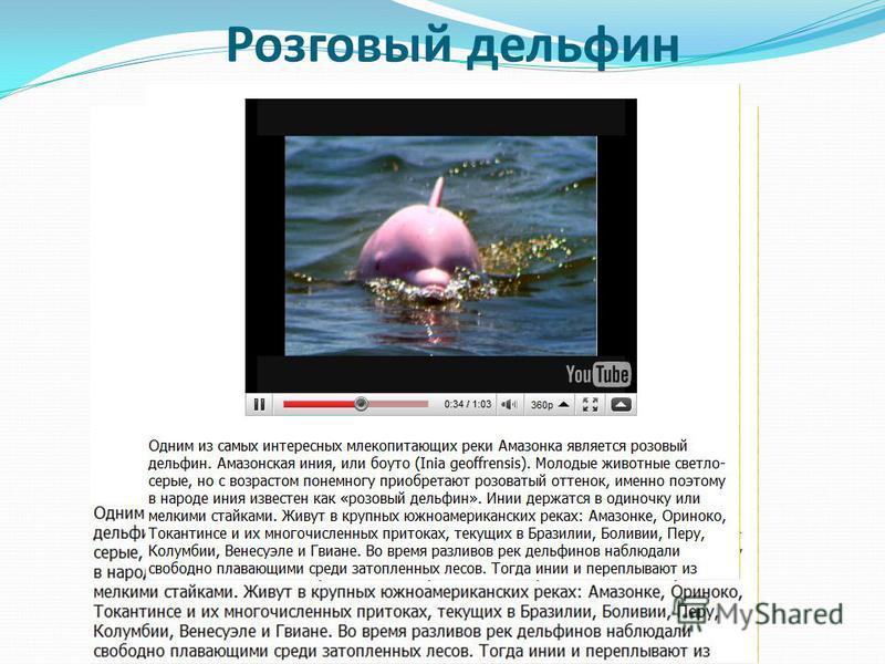 Розговый дельфин
