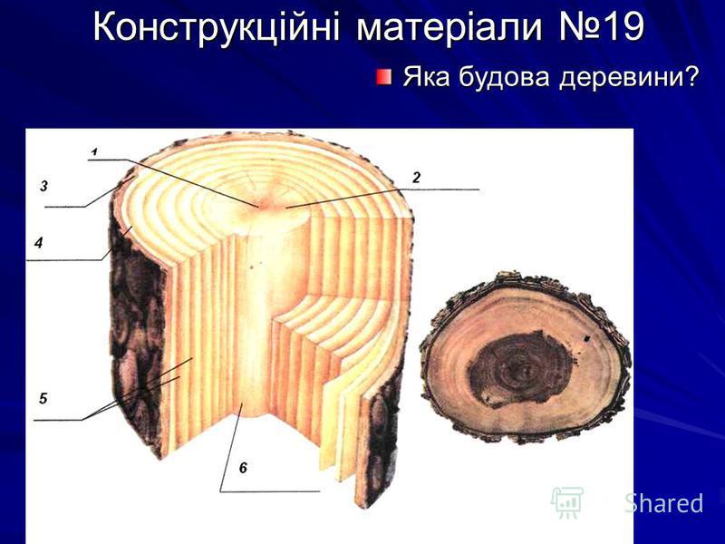 Конструкційні матеріали 19 Конструкційні матеріали 19 Яка будова деревини?