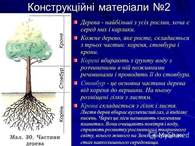 Конструкційні матеріали 2 Конструкційні матеріали 2 Дерева - найбільші з усіх рослин, хоча є серед них і карлики. Кожне дерево, яке росте, складається з трьох частин: кореня, стовбура і крони. Корені вбирають з ґрунту воду з розчиненими в ній поживни
