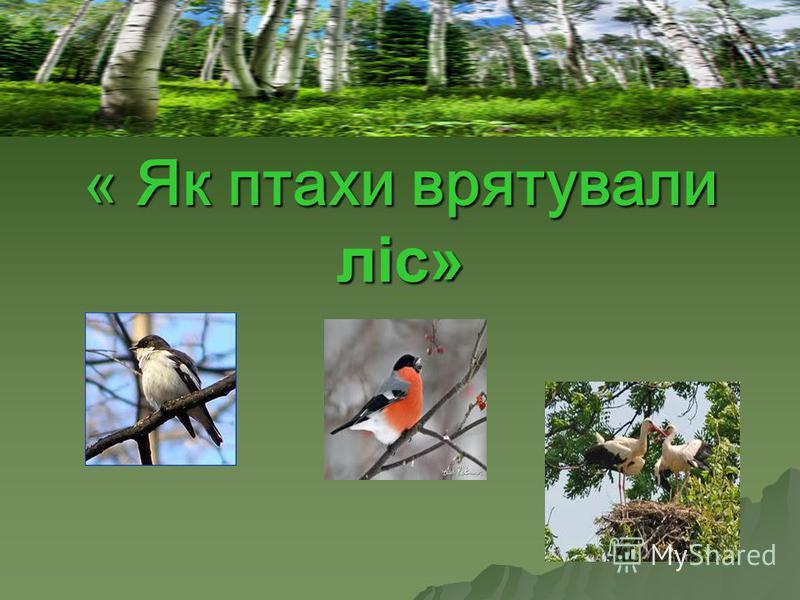 « Як птахи врятували лiс»