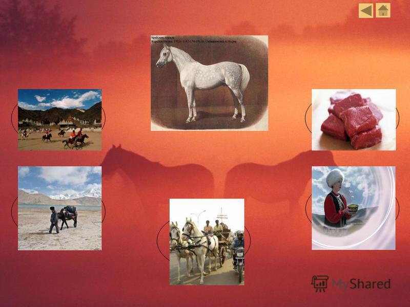 Перевозка грузов Средство передвижения Кумыс Мясо Спортивные состязания