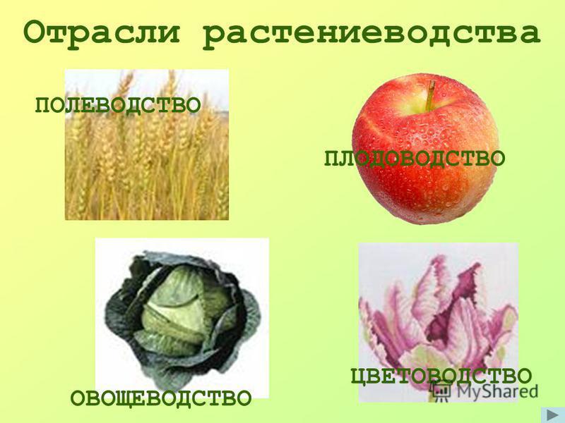 Отрасли растениеводства ПЛОДОВОДСТВО ПОЛЕВОДСТВО ОВОЩЕВОДСТВО ЦВЕТОВОДСТВО
