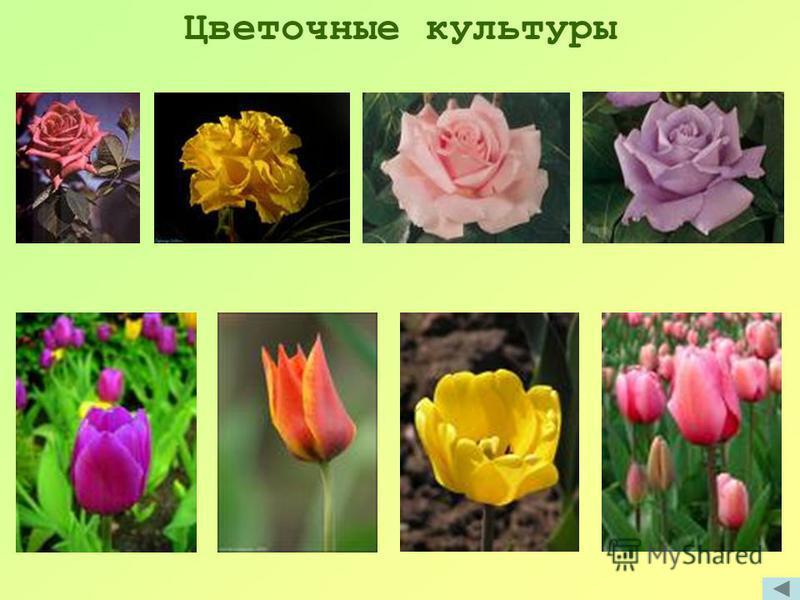 Цветочные культуры