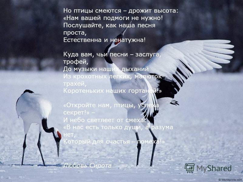 Птицы Звенит голосами рассветная тишь – Пичуг разливаются звоны. И кажется, будто вот-вот – и взлетишь В зовущие певчие кроны. «Примите нас в стаю, мы ваша родня – Пернаты, крылаты, певучи, Мы будем вам вторить, вот так же звеня, А может быть, даже п