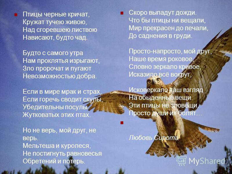 Но птицы смеются – дрожит высота: « Нам вашей подмоги не нужно! Послушайте, как наша песня проста, Естественна и ненатужна! Куда вам, чьи песни – заслуга, трофей, До музыки наших дыханий Из крохотных легких, малюток- трахей, Коротеньких наших гортане