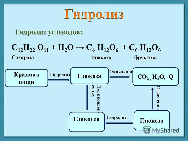Гидролиз углеводов: Крахмал пищи Глюкоза CO 2, H 2 O, Q Гликоген Глюкоза Гидролиз Окисление Поликонден- сация Гидролиз Окисление C 12 H 22 O 11 + H 2 O C 6 H 12 O 6 + C 6 H 12 O 6 Сахароза глюкоза фруктоза