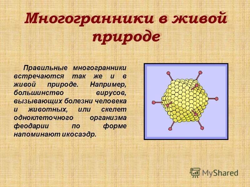 Многогранники в живой природе Многогранники в живой природе Правильные многогранники встречаются так же и в живой природе. Например, большинство вирусов, вызывающих болезни человека и животных, или скелет одноклеточного организма феодарии по форме на
