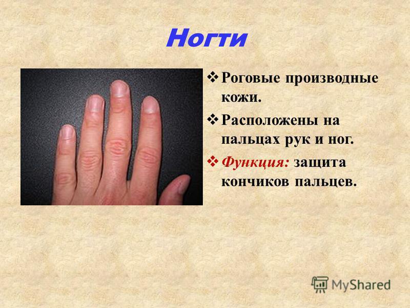 Ногти Роговые производные кожи. Расположены на пальцах рук и ног. Функция: защита кончиков пальцев.